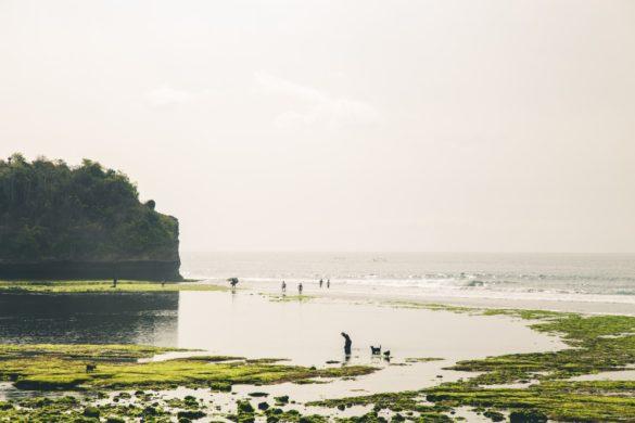 Billeddagbog Bali-1-11