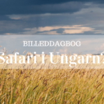 Safari i Ungarn